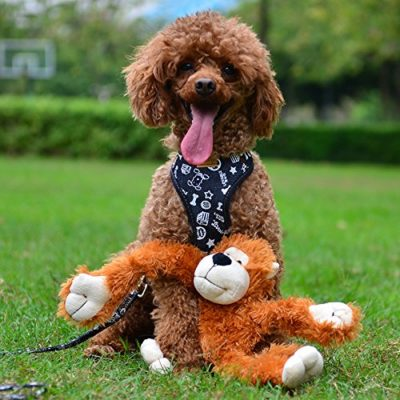 50% off Chew Toys Squeaky Plush Dog Toy Pack of 2 for $5.80